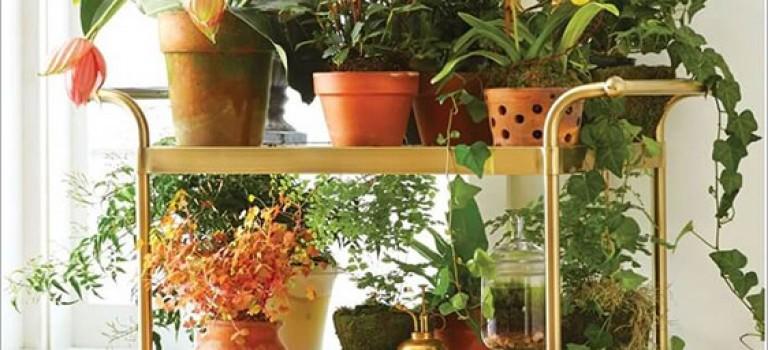 باغچه کوچک دست ساز شما