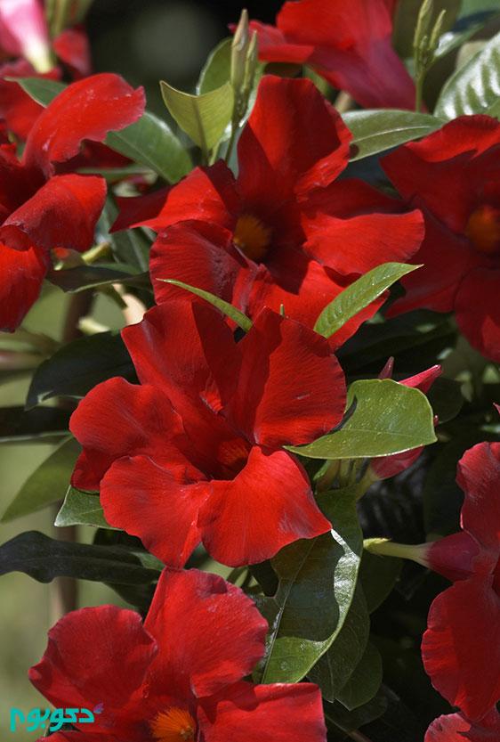 گیاهان بهاری: یاسمن
