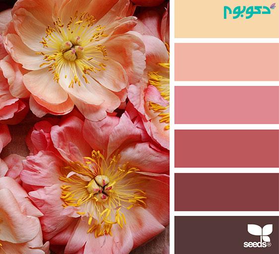 ColorFlora5_150