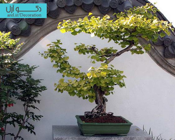 دکوراسیون داخلی ، گیاهان آپارتمانی