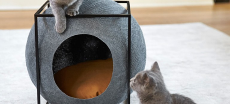 طراحی خانه برای حیوانات خانگی