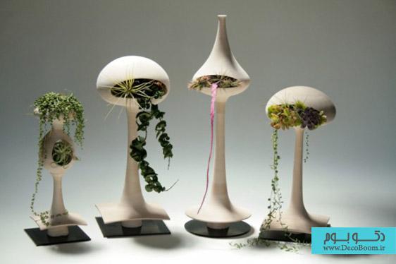 گیاهان آپارتمانی، هوای خانه را تصفیه می کنند