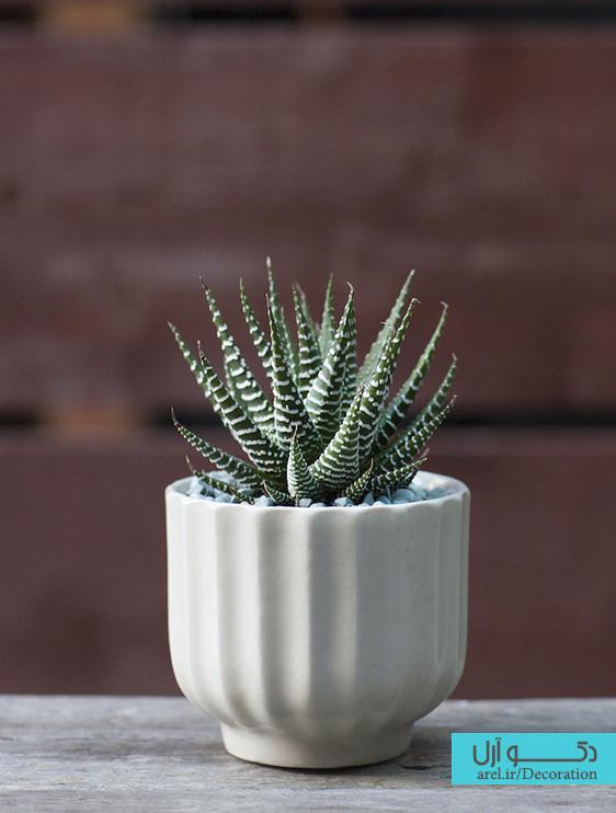 دکوراسیون داخلی، گیاهان آپارتمانی