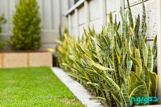 معرفی گیاهان آپارتمانی (قسمت چهارم)