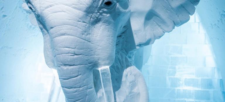 طراحی داخلی هتل یخی!!