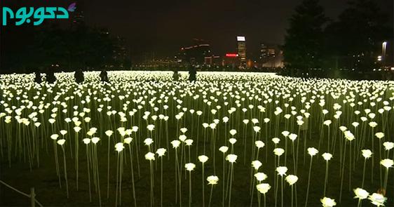 دشت گل رزهای سفید از جنس ال ای دی