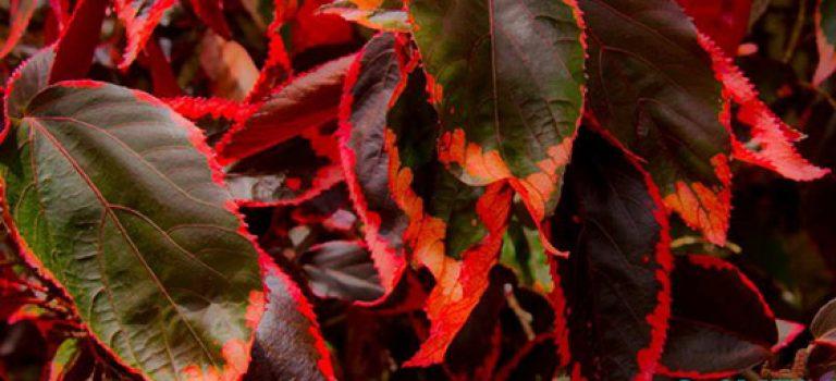 معرفی گیاهان آپارتمانی (قسمت اول)