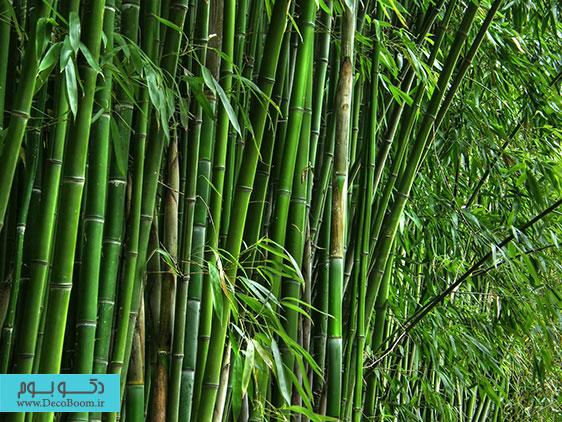 بامبو در دکوراسیون داخلی
